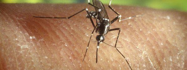 Aceites esenciales repelentes de insectos