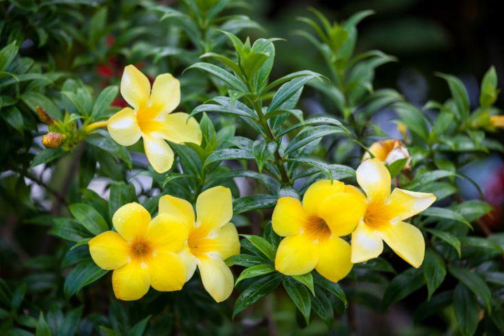 Flori tropicale în grădina ta: urmând sfaturile noastre poţi amenaja în curte sau pe balcon o grădină tropicală în miniatură.