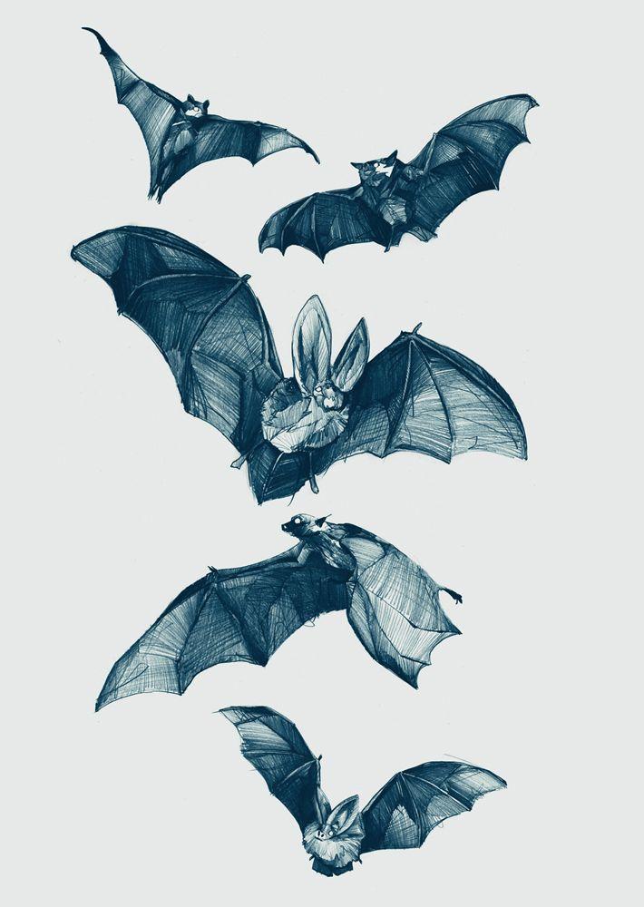 Bats illustration