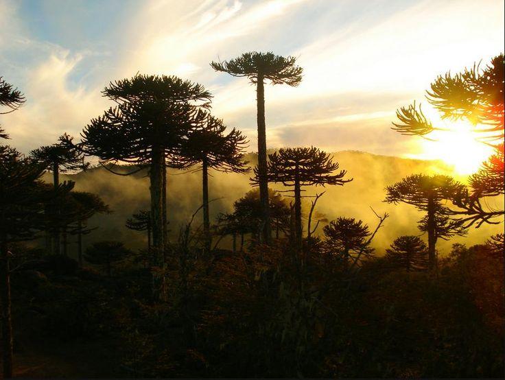Parque Nahuelbuta, Chile