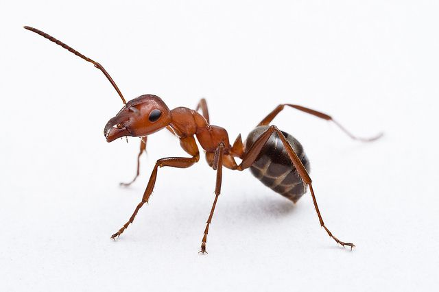 ant how can that be made by evolution?
