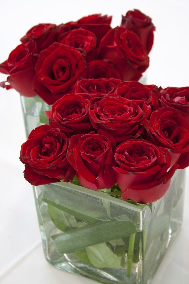 21 Best Rosas Rojas Images On Pinterest Red Roses Flower Arrangements And Red Flowers