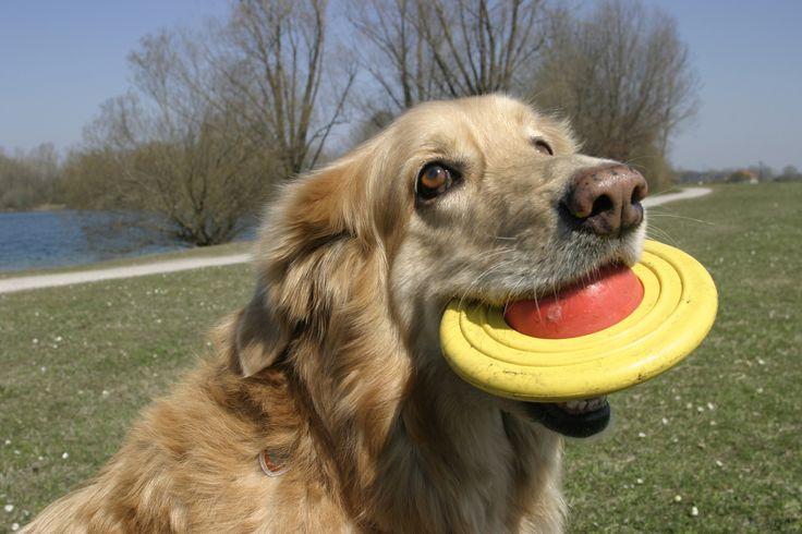 Eierlauf mit dem Hund Oder versuchen Sie einen Eierlauf. Stecken Sie mit ca. fünf (Ski-)Stöcken eine Slalomstrecke ab. Ein Team steht an der Start- bzw. Ziellinie, der Mensch hält in der rechten Hand einen Löffel mit einem Plastik-Ei, in der Linken die Leine mit Hund, der sitzen soll. Dann versucht der Zweibeiner, so schnell wie möglich den Slalom mit Ei und Hund (bei Fuß) zu bewältigen – die Zeit wird gestoppt;