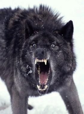"""Insanity Wolf"""