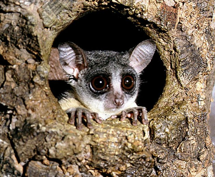 Bush Baby | Babies, The movie and Wildlife conservation