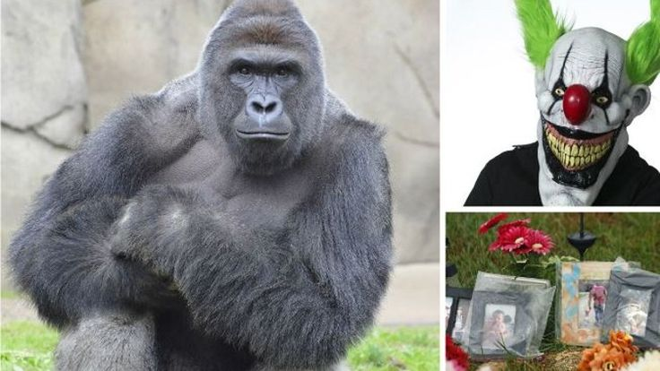 Harambe, local clown attack among 2016 top trending stories  Who could forget the death of a noble silverback gorilla, Harambe, after a young boy climbed into his enclosure at the Cincinnati Zoo & Botanical Garden?