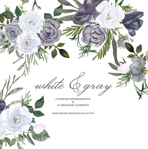 Watercolorblack White Roses Clipart Separate Elements Hand