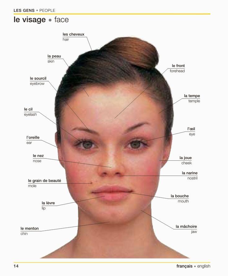 """""""Le visage   Face"""" [1]: lexique élémentaire bilingue dans la catégorie """"Les gens   People"""" d'un dictionnaire visuel français-anglais"""