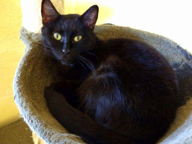 A pesar de tener este nombre Bigotes es una hembra, una gatita buena aunque algo tímida con unos ojos... #adoptar #mascotas #adopcion #perros #gatos