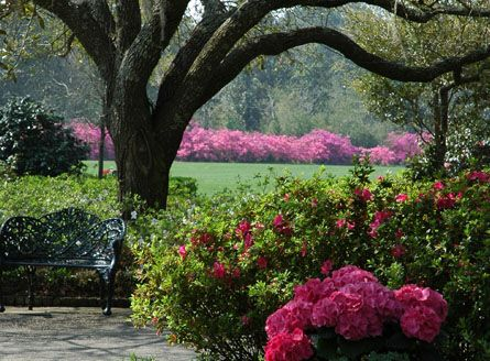 Trees always make a good background...Beautiful Flower, Southern Comforters, Gardens Inspiration, Pink Hydrangeas, Southern Charms, Beautiful Spring, Shades Gardens, Nature Beautiful, Gardens Outdoor