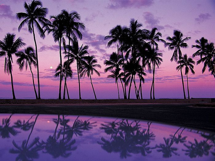 Purple Sunset Oahu: Tropical Reflection, Favorite Places, Purple Sunsets, Sultry Summer, Beautiful Places, Places I D, Beautiful Purple, Keys Sunsets, Hawaiian Islands
