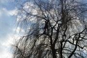 Elagage d'arbres en Brabant Wallon http://www.architecte-paysagiste.be/jardin-jardinage/entretien-de-jardin-parc/