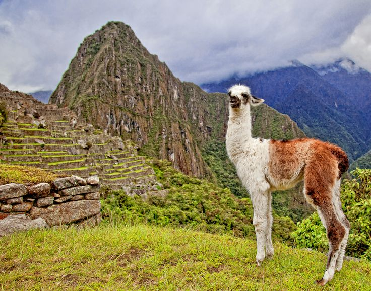 Would love to go to Peru: Photo Baby