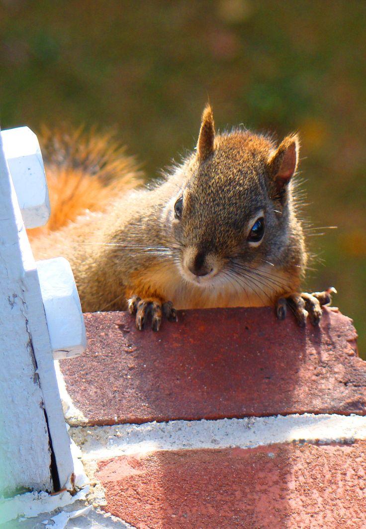 "squirrel: ""um where's the food!?"""