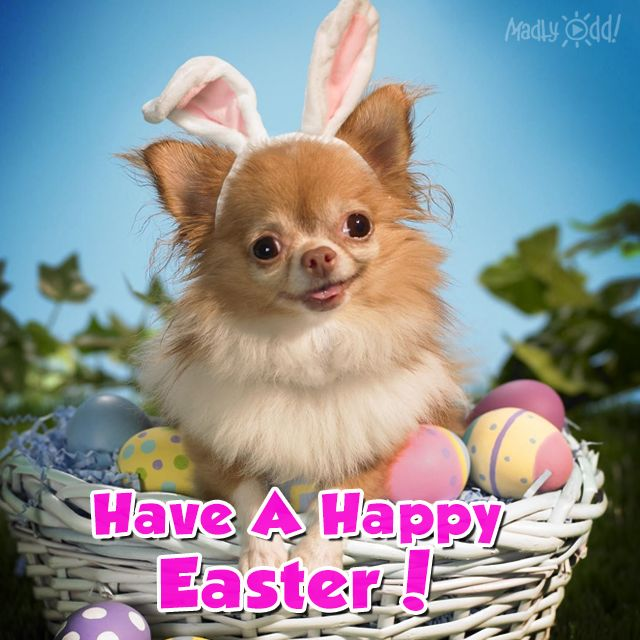 Cute Happy Easter Dog easter easter quotes easter images easter quote happy easter happy easter. easter pictures funny easter quotes happy easter quotes quotes for easter cute easter quotes