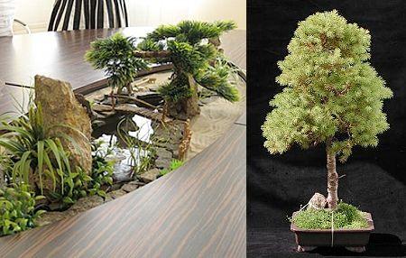 Настільна композиція з деревом бонсай