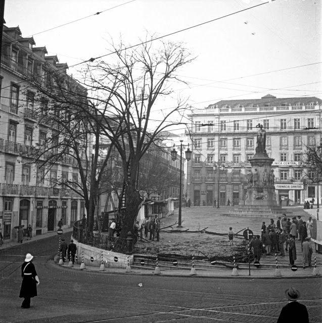 Praça de Camões, poda das tílias - c.1950