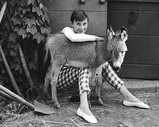 Audrey Hepburn and a young miniature donkey -- one of my favorite actresses