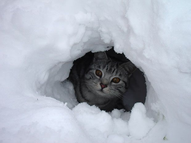 239 Best Images About Cats In Winter On Pinterest Cats