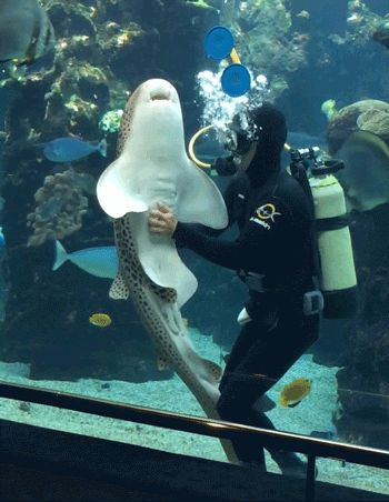 Watch A Playful Shark Bask In The Glory Of An Epic Belly...