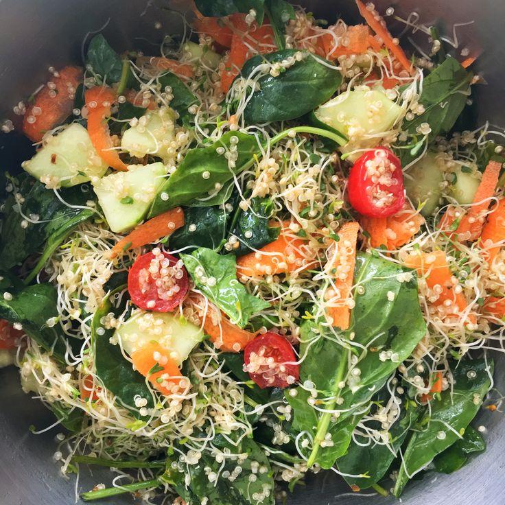 Ensalada Sana de Espinaca, germen de alfalfa y quinoa, aderezo de aceite de oliva y limón.