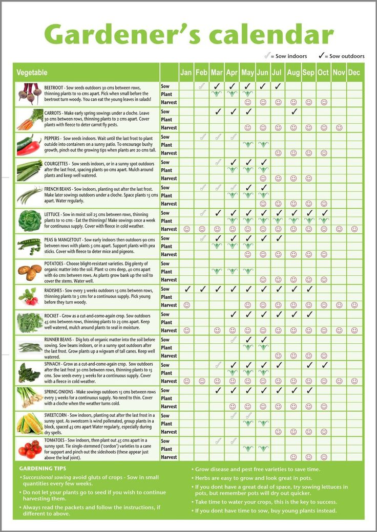 A3 novice gardener's/beginner's vegetable growing gardening calendar