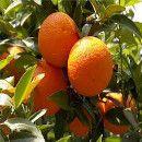 Receta de cocina: Mermelada casera de naranja, sin azúcar | ECOagricultor