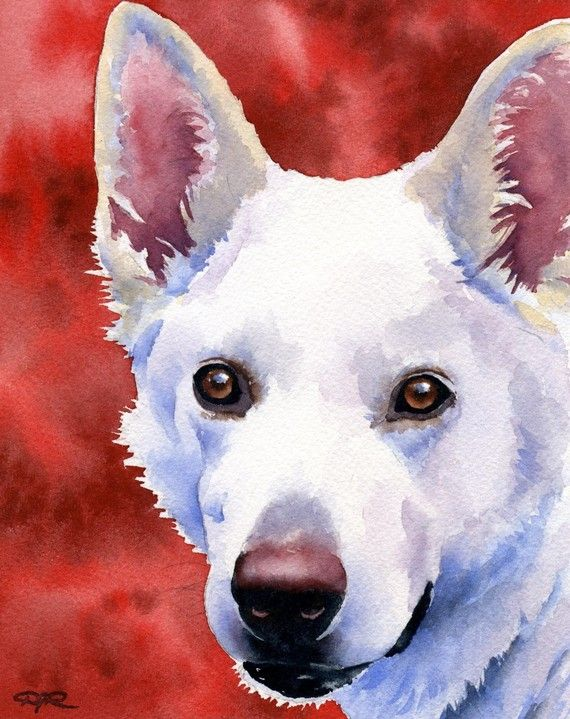 WHITE GERMAN SHEPHERD Dog Art Print Signed by Artist D J Rogers via Etsy♥♥♥