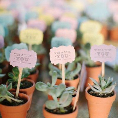 Cadeau pour invités: plante grasse miniature
