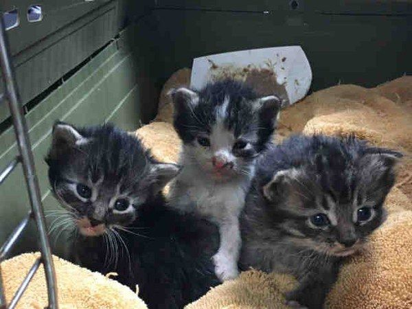 Box Of Kittens Rescued From Rubble After Devastating Wildfire In