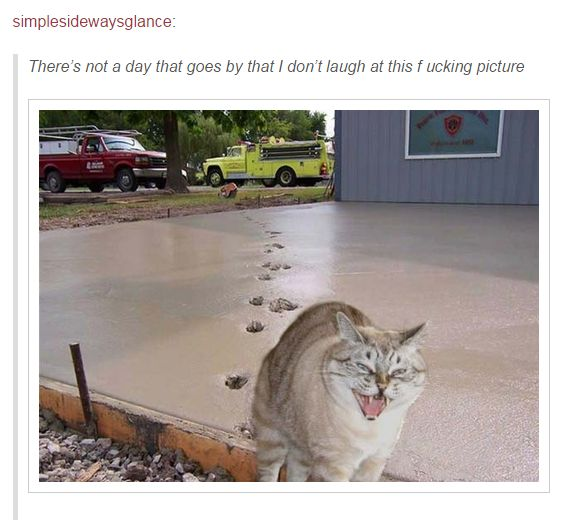 OK, we need to talk about cats.   19 Photos That Prove Cats Can't Possibly Be Real