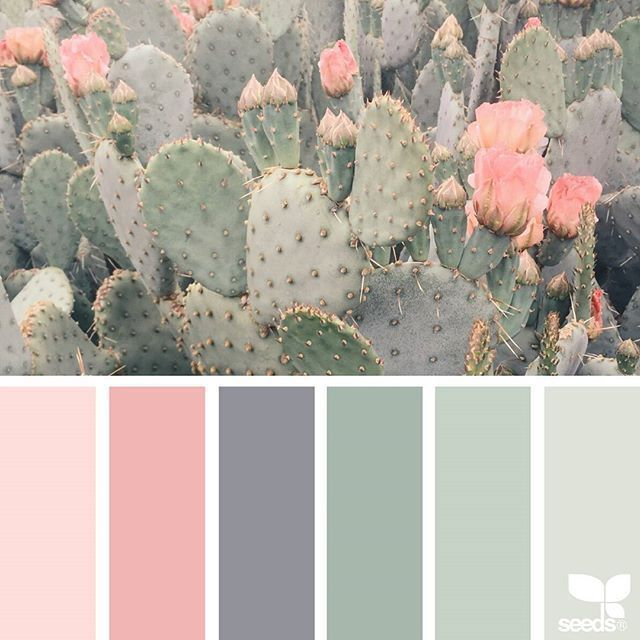 Das heutige Inspirationsbild für {Cacti Color} ist von @ 1lifeth …