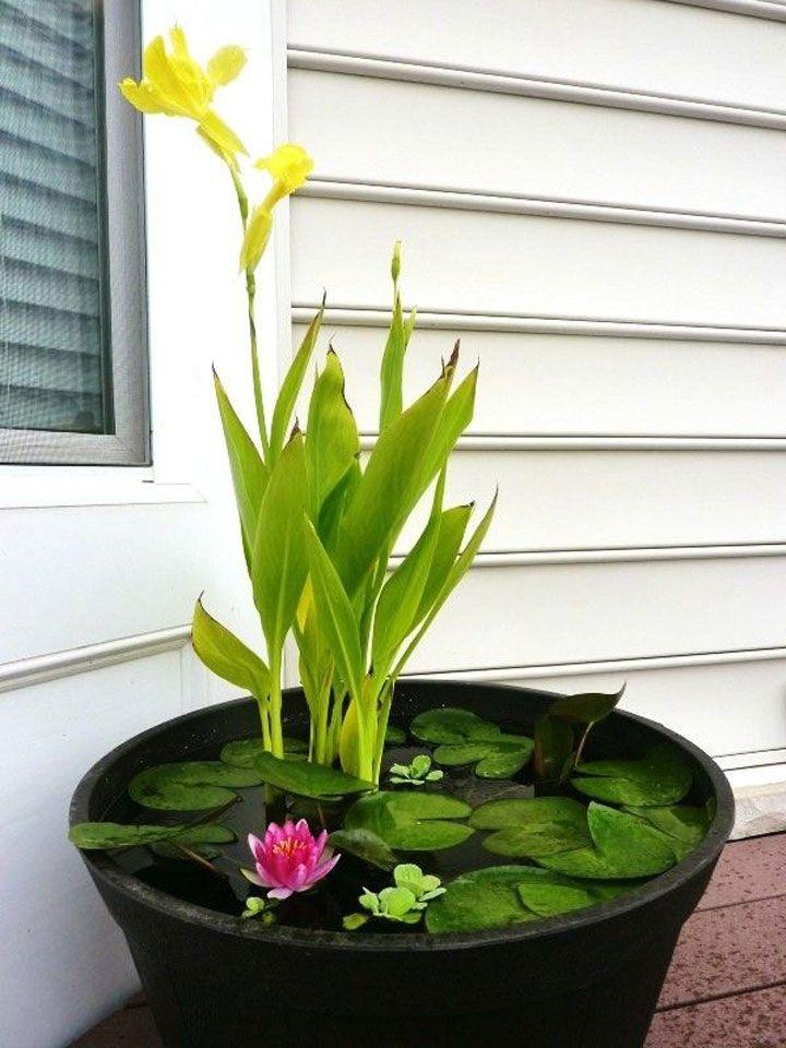 Ideas for mini-ponds