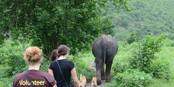 petition: Save Elephants World safe haven in Thailand