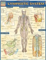 Manual Lymph Drainage Massage to Support the Health of the Lymphatic System