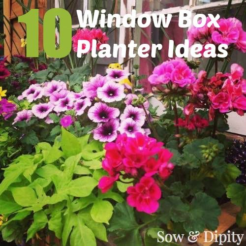 10 Window box planter Ideas, if you don't have space... these ideas are for you!
