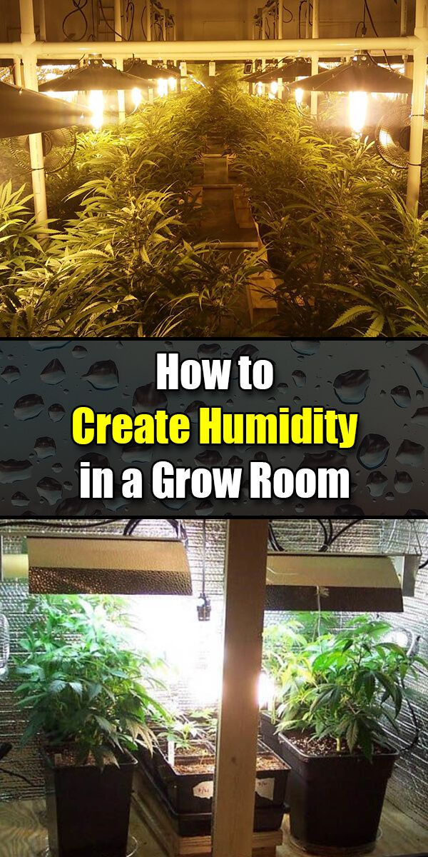 Complete guide on Humidifiers for grow room and tent