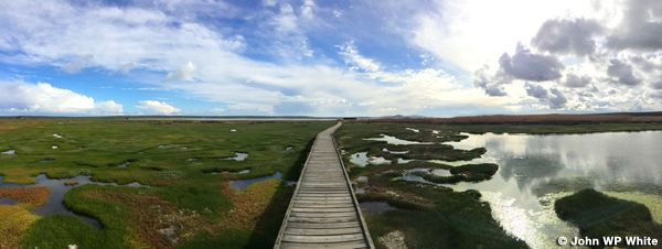 Geelbek Bird Hide | West Coast National Park