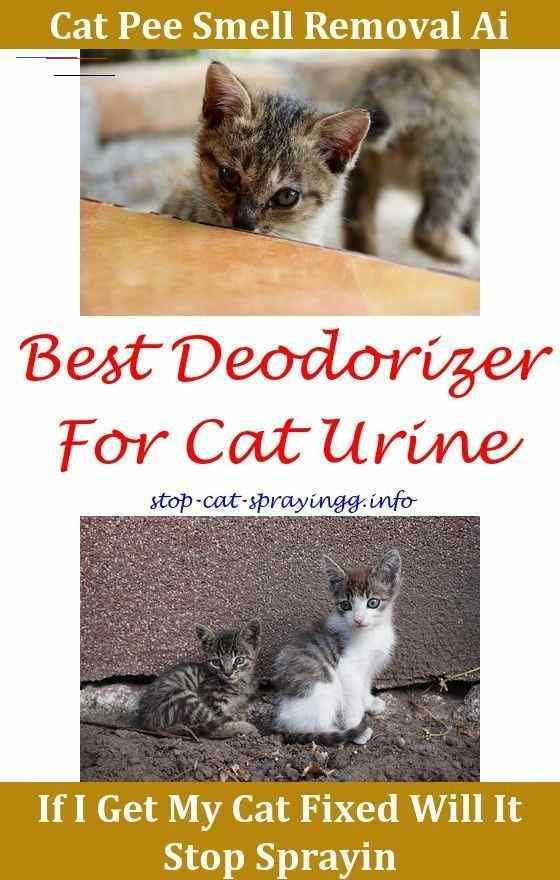 Spayed Female Cat Spraying Cat Urine Stain Carpet Cleaning Cat Urine Removal How To Remove Cat Urine From Carpet Male Cat Marking Indoors Cat Spraying In 2020