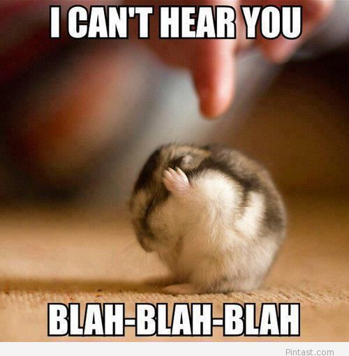 Funny annoyed hamster 2014 photo