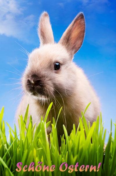 Neues Osterblog mit schönen kostenlosen Osterbildern. Ostergruss