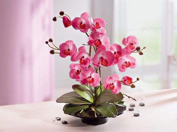 Уход за орхидеей в домашних условиях. Выращивание орхидей в квартире