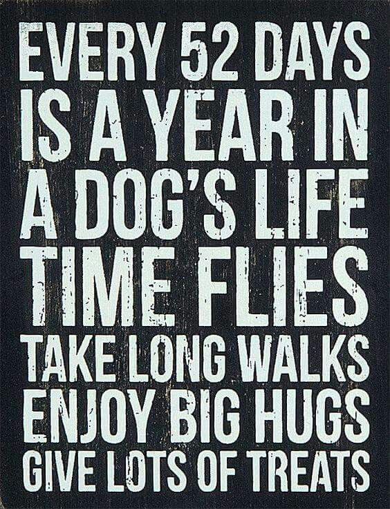 How blessed you are if you have a dog in your life~