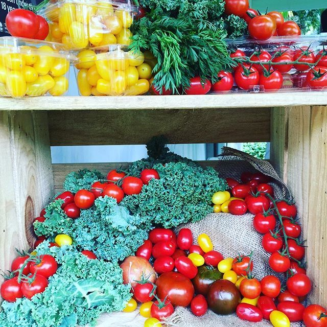 Sydney's Tomato Festival in the Royal Botanical Gardens