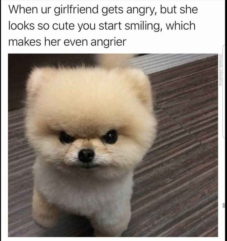 21 Dog Memes To Remind You Just How Derpy Those Big Floofers Are
