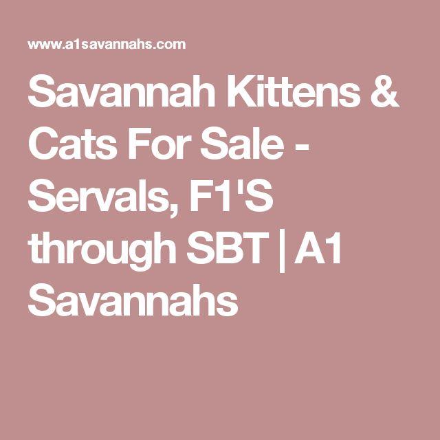 Savannah Kittens & Cats For Sale - Servals, F1'S through SBT | A1 Savannahs