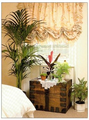 Best Plants For Bedrooms/Bathrooms - good list for varying light and temperatures