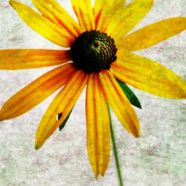<3: Diyrandom, 1234, Life Is Beautiful, Flowers Pl, Favorite Things, Awesome Living, Photo Flowers, Daisies, Forget
