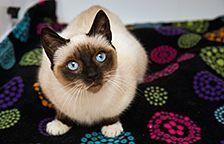 Cats For Adoption Near Me - http://pets-ok.com/cats-for-adoption-near-me-cats-1268.html