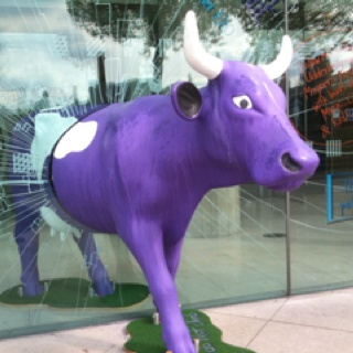 Purple Cow Breaking Out